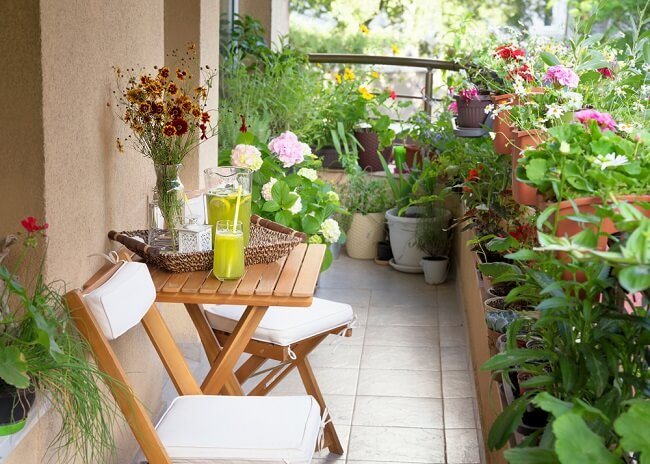 Veel planten in kleine tuin