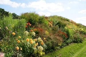 Kleurige vaste planten border