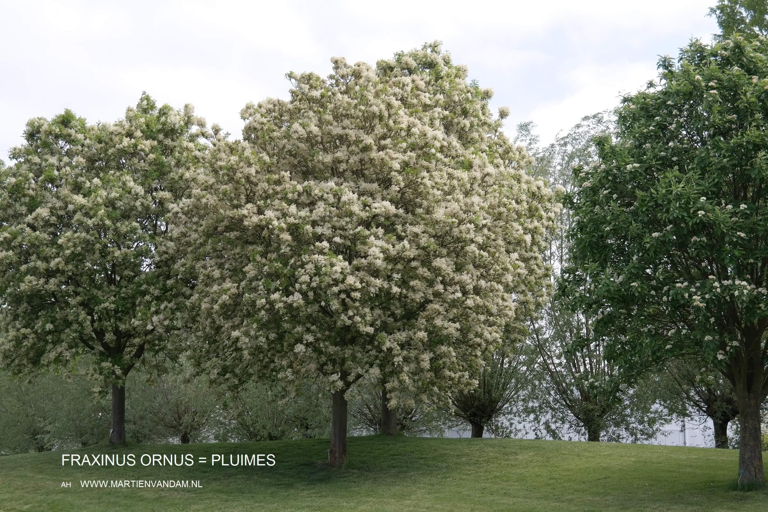 Aarden Badkamer Verplicht : Bomen de longen van de aarde. ik woon fijn
