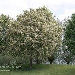 Bomen, de longen van de aarde.