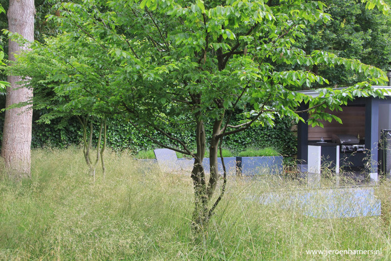 Grillige meerstammige boom - www.jeroenhamers.nl