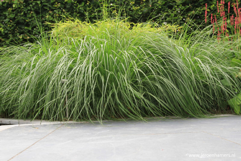 Siergrassen, strakke tuin, moderne tuin, weelderige beplanting, tuinontwerp