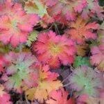 Herfst, tuin winterklaar maken?!