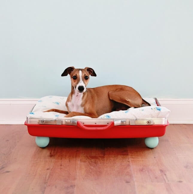 Elegante hondenmand