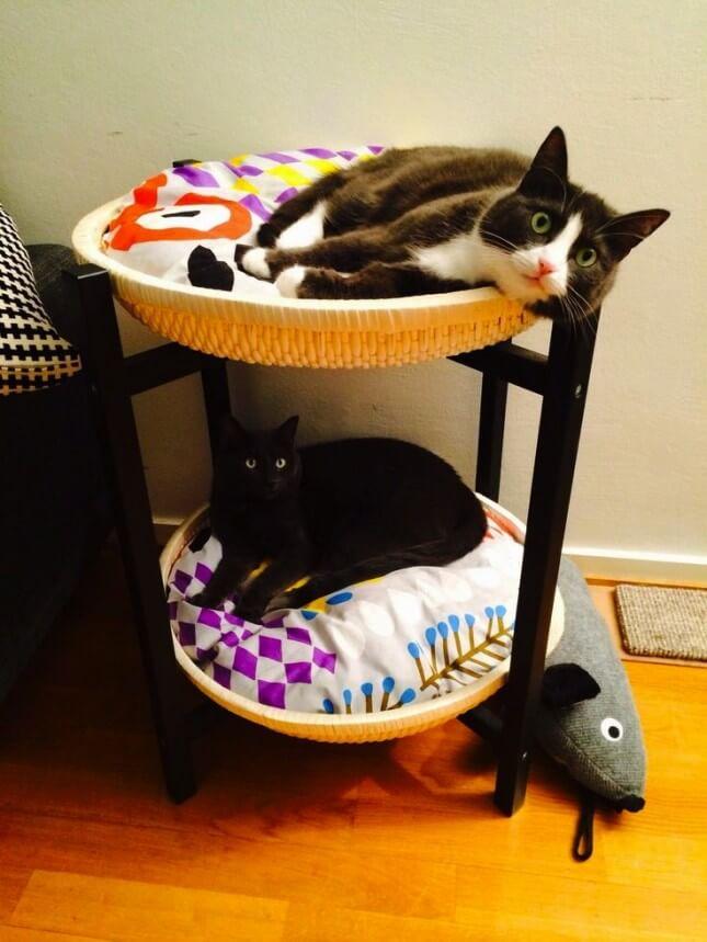 Ideale slaapplaats voor katten