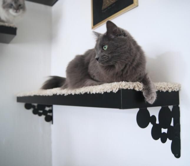 Ijdele katten slaapplaats