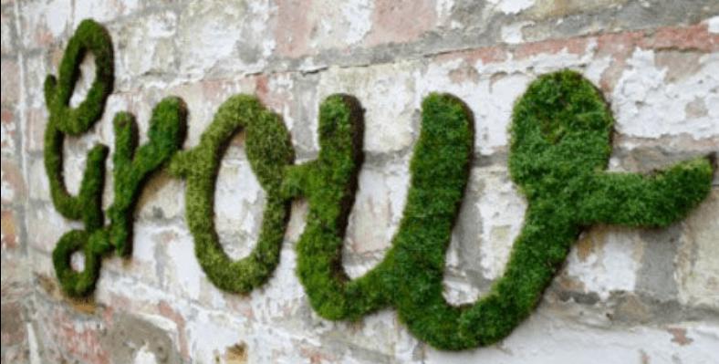 DIY mosschilderij - budgi.nl