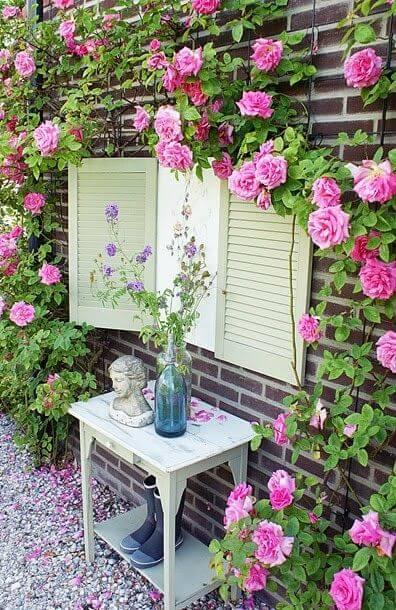 Klimroos - just-jeannette.blogspot.nl