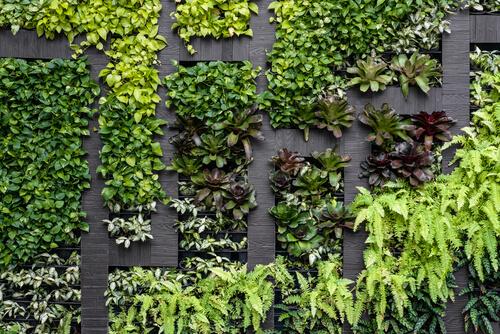 Groene muur met vakken