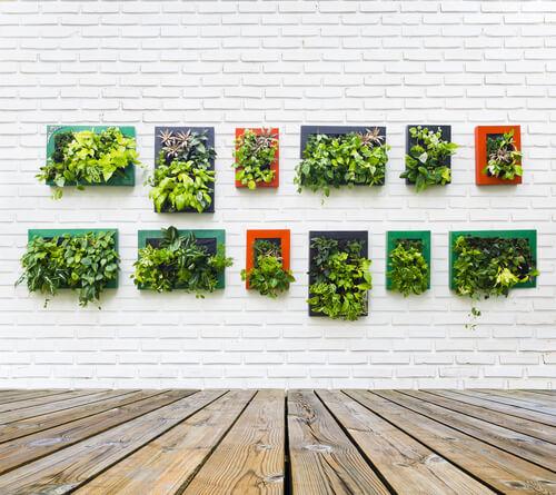 Fotolijsten met plantjes
