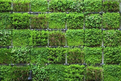 Tuinmuur met vakken voor verticale tuin