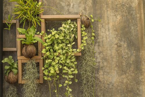 Houten rekjes voor planten