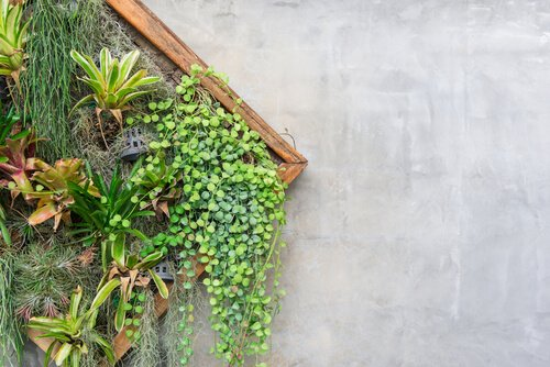 Ruitvormig frame met kleine plantjes