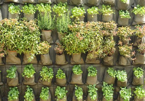 Verticale tuin van jute zakken