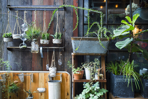 Plantenhoekje met diverse plantjes
