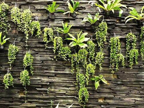Natuursteen wand met verticale tuin