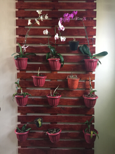 Pallethout voor verticale tuin