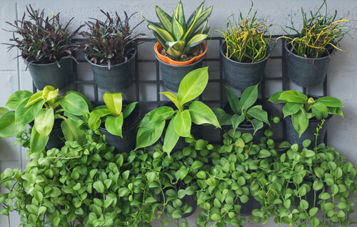 Kruidenrekje met plantjes