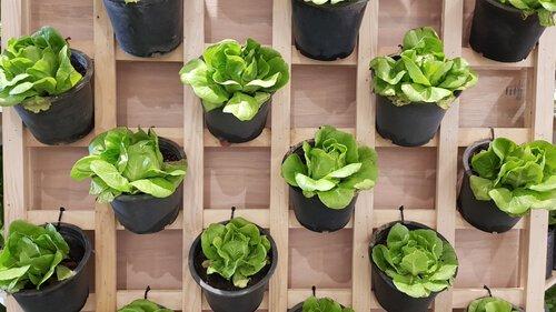 Trellis met plantjes voor kruidenrek