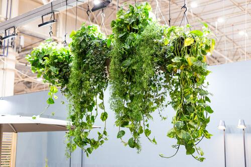 Verticale tuin met hangplantjes