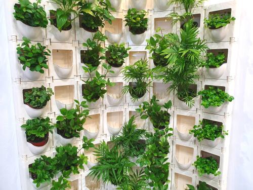 Planten in vakken voor verticale tuin