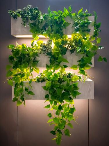 Hangende plantjes met verlichting in verticale tuin