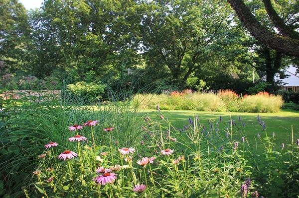 Echinacea - zonnehoed