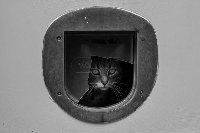 Industrieel kattenluik