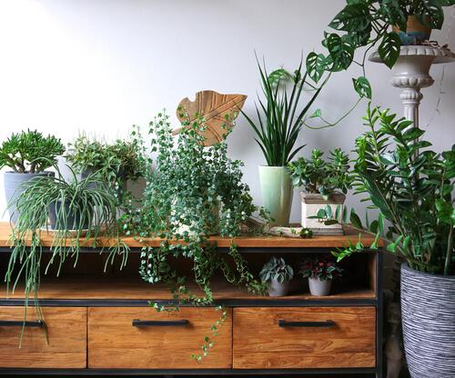 Jungle meubels in je interieur