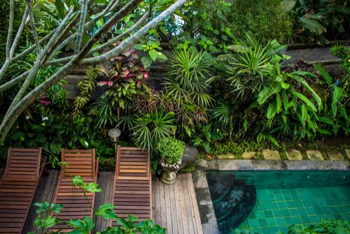 Jungle tuin