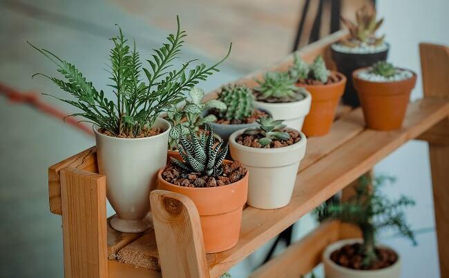 Planten in de gang