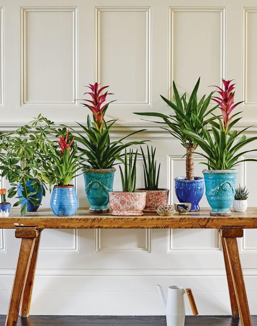 Planten in de hal zien er gezellig en welkom uit.