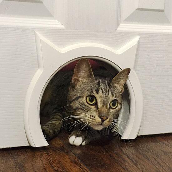 vrijheid kat in huis