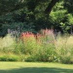 Natuurlijke tuin in Oss