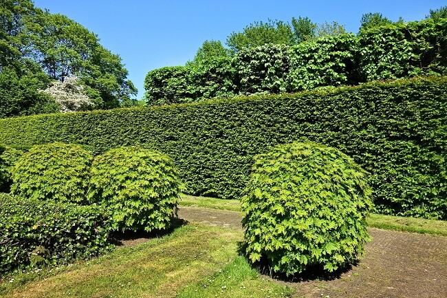 Hoge heg als tuinafscheiding