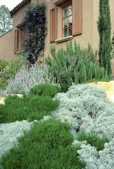 Groene tinten van verschillende mediterrane planten