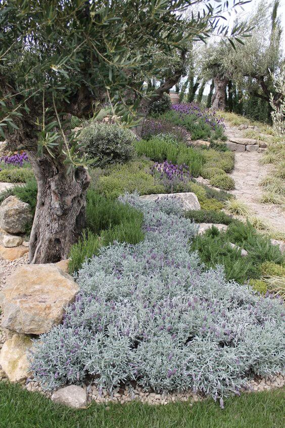 Karakteristieke mediterrane tuin met zandpad