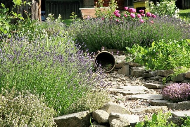 Lavendel en kruiden