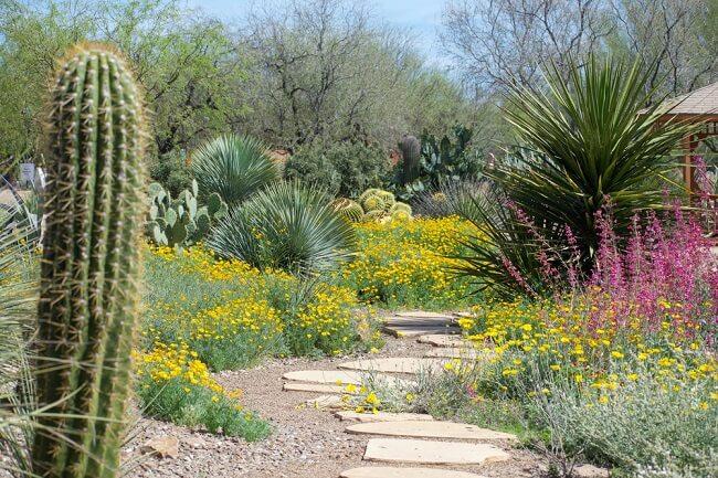 Mediterraans pad in woestijntuin