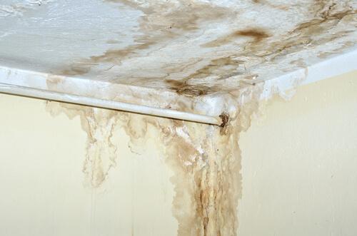schimmel onder de badkamer heeft een loodgieter nodig