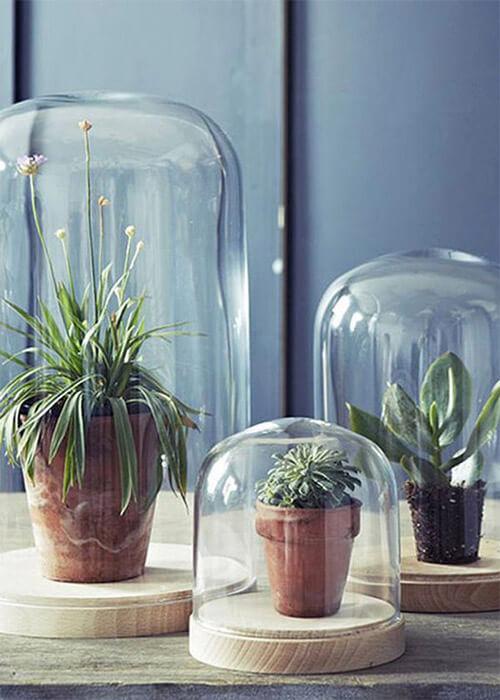 Platen in glazen stolp