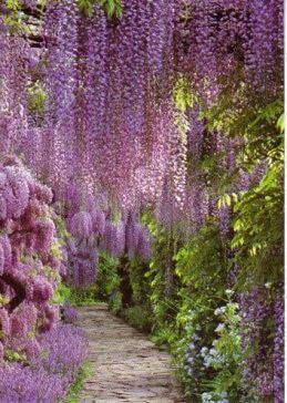 Hangende paarse planten