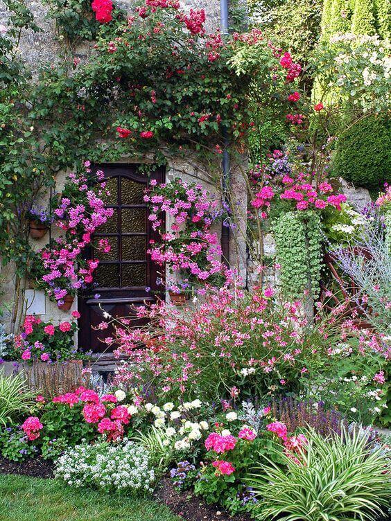 Kleurrijke planten in de tuin