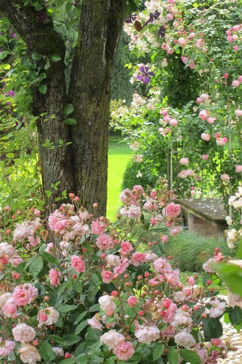 Roze rozen voor perfecte romantiek