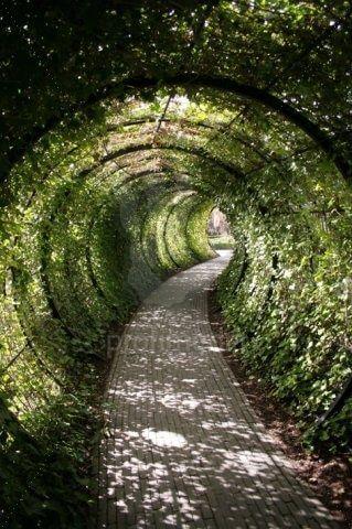 Tunnel van groen