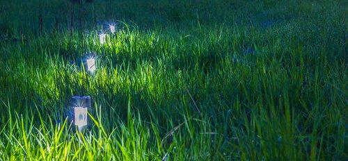 Kleine lampjes in het gras