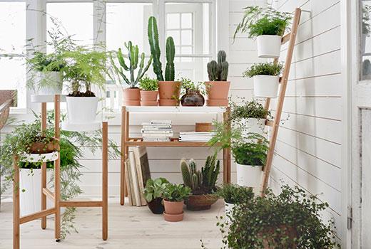 Planten Aan De Muur.Inspiratie Een Planten Muur Maken Ik Woon Fijn