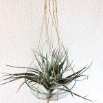 Hip in huis: de macramé plantenhanger