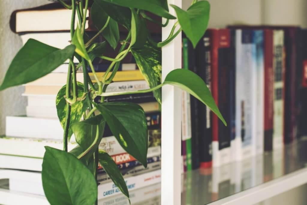 Meer groen in huis