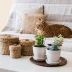 Hoe maak je jouw interieur geschikt voor een kat in huis? 5 tips